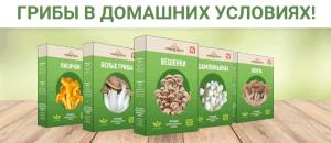 вешенки-выращивание из коробок