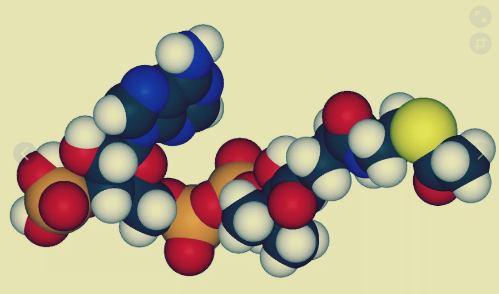 Ферменты в пищеварении