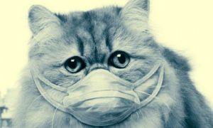 Кот в маске от коронавируса